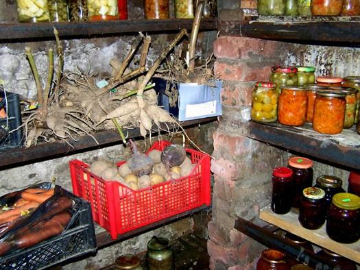 Как сохранить овощи в погребе