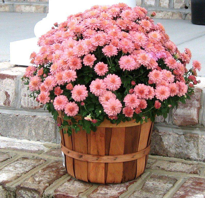 Напольная подставка для цветов