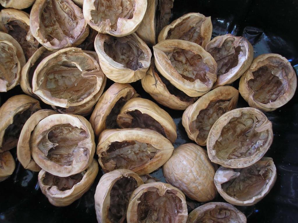 Как сделать морилку из скорлупы грецкого ореха