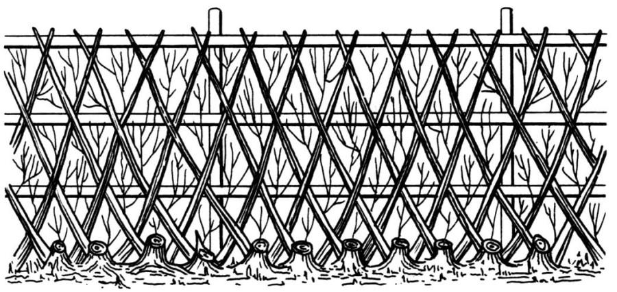 Конструкция шпалерной изгороди