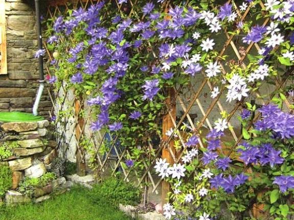 Деревянная шпалера для цветов