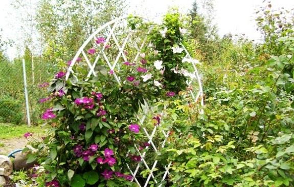 Круглая шпалера для цветов